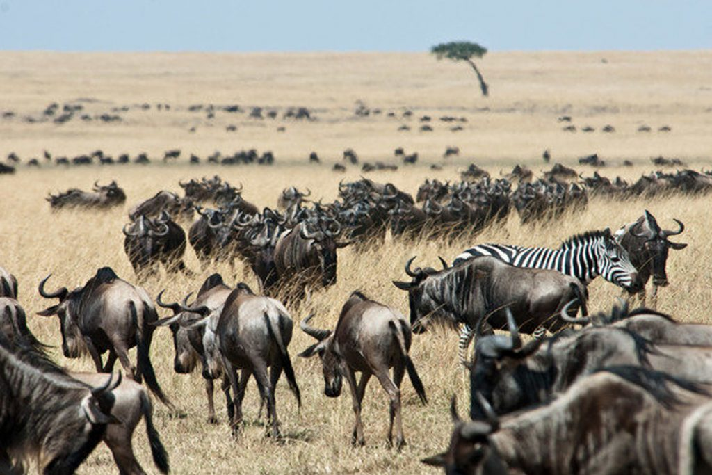 Masai Mara National Reserve and Conservancies